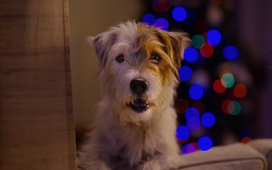 Xbox tugs on the heartstrings of pet owners in its new ad campaign